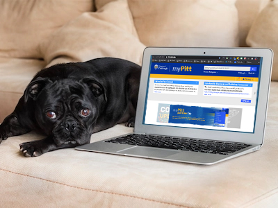 dog with laptop viewing MyPitt webpage